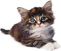 激安!愛猫キャットグッズ・ネコ用品通販